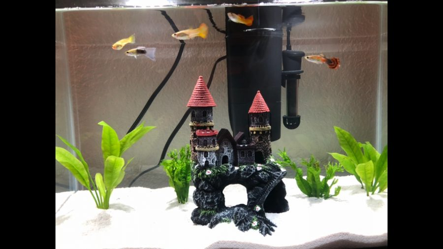Senior Derek Czapek owns five aquariums that he stores in his home. He hopes the Aquarium Club can build aquariums at BVH once in-person learning resumes.